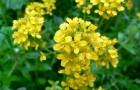 Стоит ли опасаться распространения экзотических растений