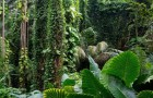 Тропический ботанический сад Гавайев