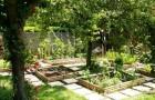 Выращивание овощей в тени – это возможно
