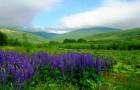 Южные растения превосходят северные