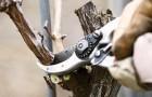 Задачи регулярной обрезки кустарников