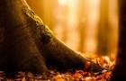 9 сентября 2014 года: приносим лесные деревья