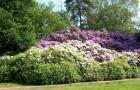 Ботанический сад рододендронов