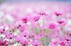 Физические, энергетические и духовные уроки растений