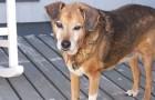 Гавайская собака пои