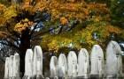 Кладбище Маунт-Оберн