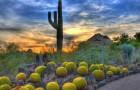 Пустынный ботанический сад