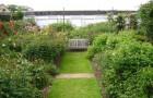 Розовый сад Дэвида Остина