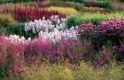 Сад Миллениума в Пентшорпе