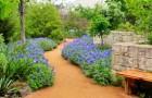 Центр дикорастущих цветов Леди Берд Джонсон