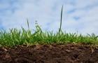 10 апреля 2015 года: греем почву