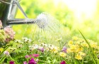 10 июня 2015 года: поливаем быстро и эффективно