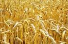 Будущее готовит нам новые земли и сокращение урожаев