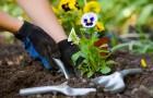 Как использовать смартфон в садоводстве