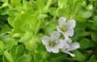 Какие травы помогут улучшить память