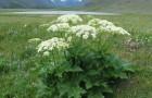 """Природа наносит ответный удар: """"ослепительное"""" растение"""