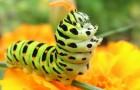 Растения и жующие их гусеницы