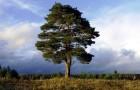 Изменение климата ускоряет рост деревьев