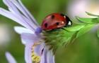 Почему защита растений от вредителей срабатывает не всегда