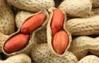 Решение проблемы с аллергией на арахис