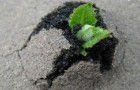 И сотни лет спустя сорняки продолжают развиваться
