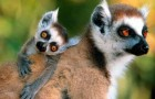 Значение сохранения редких видов для окружающей среды