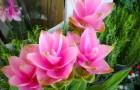 5 негормональных трав для облегчения симптомов менопаузы