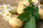 Картофель предотвращает набор лишнего веса!