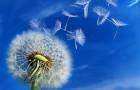 5 трав и специй для снятия боли в суставах
