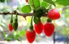 """""""Чудо ягода"""" придаст нелюбимым блюдам яркий вкус"""
