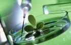 Путешествие наночастиц через растения до нашего стола