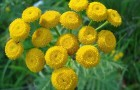Семь самых мощных лекарственных растений