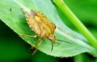 Ешьте не только растения, но и насекомых!
