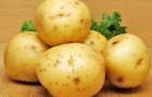 Нужна ли влага картофелю?